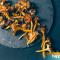 Le proprietà dei funghi: un valido aiuto per il nostro sistema immunitario